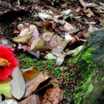 ぼっちも楽しめる恋人の聖地!松山の二之丸史跡庭園