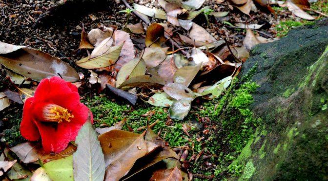 県庁前散策②~恋人の聖地・二之丸史跡庭園へ乗り込む