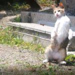 実は猫の楽園!明神池&笠山へ行った裏話