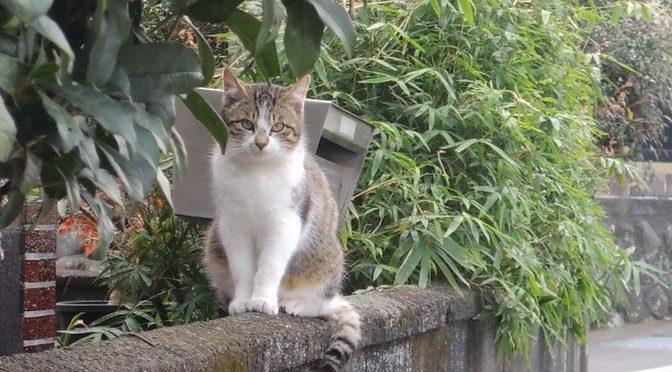 長泉なめり 散策①~ランチを逃すも猫にご褒美をもらうの巻