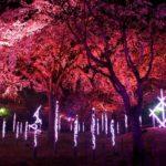 福岡城さくらまつりにヤフオクドーム‥福岡観光を満喫!青春18きっぷで九州旅行⑧~⑨