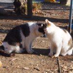 川越で初詣!三が日後も大混雑の氷川神社&町猫がいる三芳野神社へ
