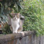 長泉なめり駅にて~ランチを逃すも猫にご褒美をもらう