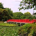 歩き疲れた果てに埼玉の絶景が!岩槻城址公園&野球場へアクセス