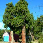 魚沼丘陵駅から俣倉社へ。2本の樹木が門のようにそびえ立つ神社