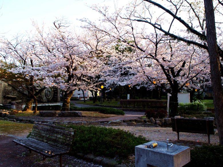 三本松公園_桜