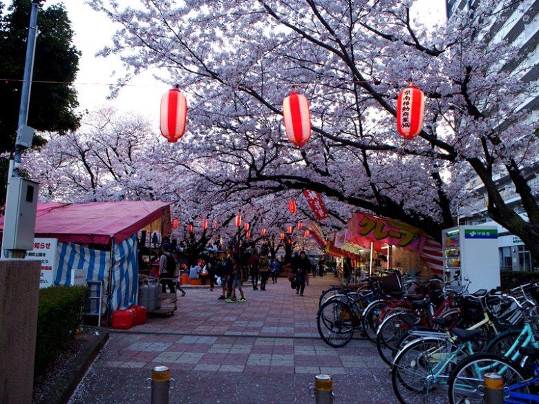 小頭町公園_桜