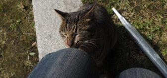 平和公園停留場が「松山町停留所」だった頃、原爆落下中心地で人懐っこい猫に会った話