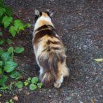 和銅遺跡の猫がトコトコついてきて可愛すぎた【秩父・聖神社から和銅採掘露天掘跡へ】