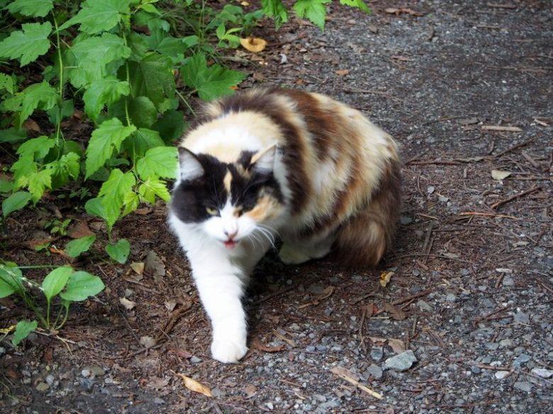 和銅遺跡_猫